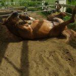 僕の好きな馬たち1