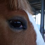 僕の好きな馬たち4