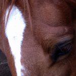 僕の好きな馬たち2