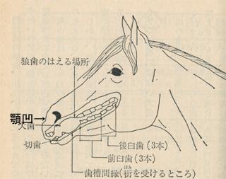 顎凹(おとがいくぼ)