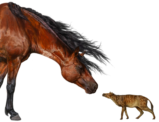 写真は現在の馬と当時の馬の大きさの比較(Scienceより)