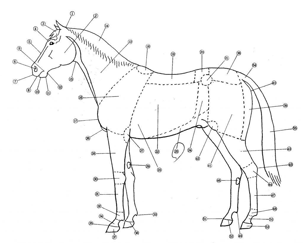 馬体の名称図