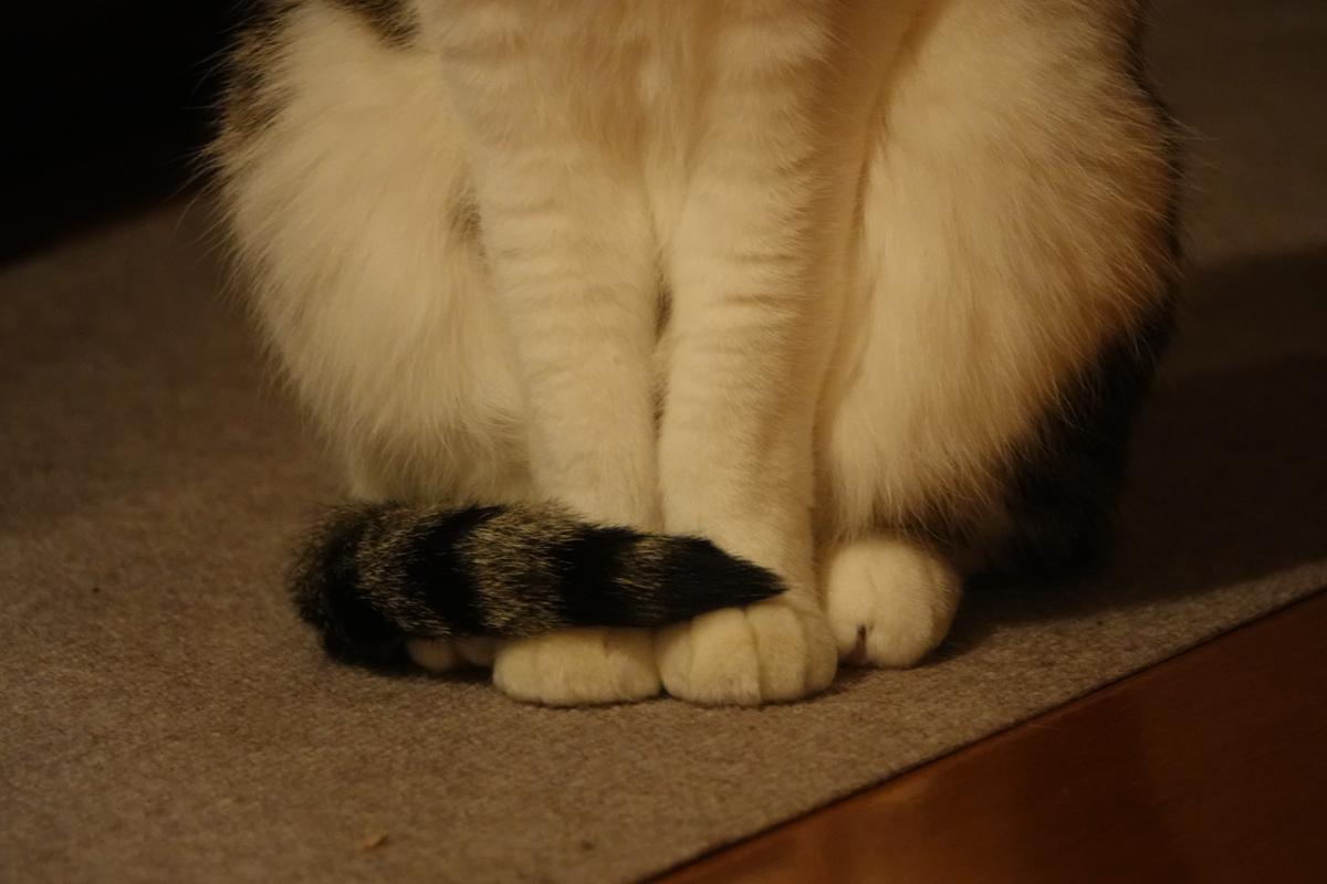 我が家の猫三態