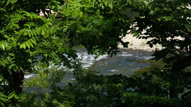 初夏の広瀬川(1)